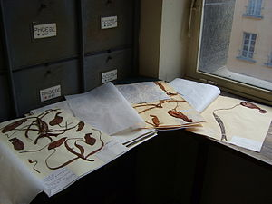 Herbarium - Herbarium specimens of various Nepenthes at the Museum National d'Histoire Naturelle in Paris, France