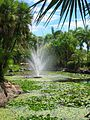 Nevis Botanical Gardens 2010 2812.JPG