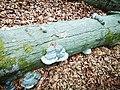 New life on dead wood.jpg
