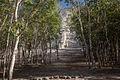 Nohoch Mul Pyramid (El Castillo, Structure C-11) (8409171590).jpg