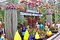Nong Nooch Pineapple garden.JPG