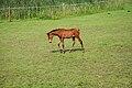 Nordkirchen-090806-9411-Pferde-vor-Westfluegel.jpg