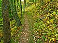 North Country Trail Manistee Forest.jpg