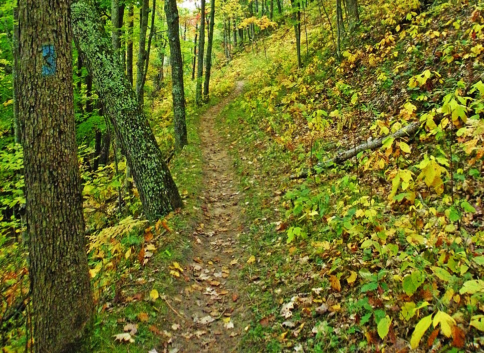 North Country Trail Manistee Forest