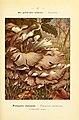 Nouvel atlas de poche des champignons comestibles et vénéneux (Pl. 47) (6459644547).jpg