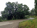 Oak Grove Campground Road.JPG