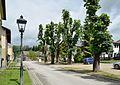 Oberer Markt, Gresten - Rosskastanien 02.jpg