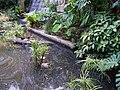 Ocean Park rainforest 3.jpg