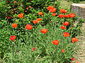 Odessa Main Botanical garden 049.jpg