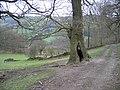 Offa's Dyke Path near Chirk Castle - geograph.org.uk - 358596.jpg