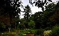 Ogród Botaniczny Uniwersytetu Warszawskiego 306.jpg