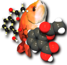 A computer graphics image. On the left is a ball and stick molecule model. In the middle is an orange fish, tail down, face up. On the right is a space-filling molecule model.