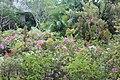 Orchid Gardens Bali, Indonesia - panoramio (14).jpg