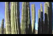 File:OrganPipeCactusNationalMonument.1.ogv