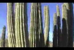 Bestand:OrganPipeCactusNationalMonument.1.ogv