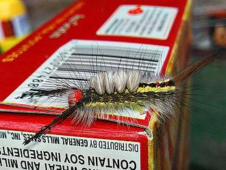 Orgyia leucostigma - Caterpillar in Michigan (June)