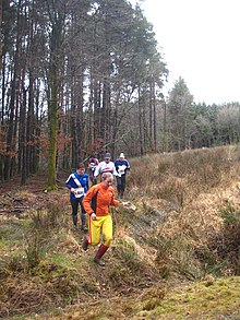 Orienteers on the edge of the forest - geograph.org.uk - 1801419.jpg