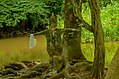 Osun Osogbo forest, river and sacred groove 12.jpg