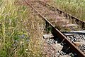 Overgrown Lysekil line 3.jpg