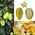 Owoce Karambola.jpg