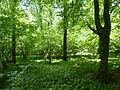 Přírodní rezervace Dařenec (6).JPG