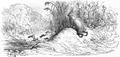 PL Jean de La Fontaine Bajki 1876 109.png