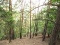 File:PR Třímanské skály, v lese.ogv