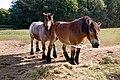 Paard 03.jpg