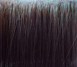Bristle - Closeup of bristles on an oil paintbrush
