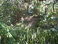 Palmetto FL Emerson Point Portavant Mound08.jpg