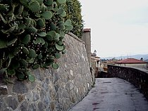 Panorama Cinigiano.jpg