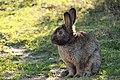 """Parcul de Animale - """"Moara de Vant"""" (8110152411).jpg"""