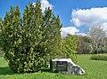 Park im Józefa Piłsudskiego głaz.jpg