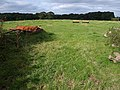 Pasture near Barham's Brook - geograph.org.uk - 944816.jpg