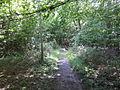 Path in Lower Wood - geograph.org.uk - 473321.jpg