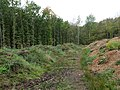 Path in the Hambach forest 09.jpg