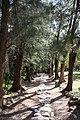 Pathway Hemingway Garden (3206340771).jpg