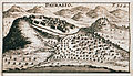 Patrasso - Sandrart Jacob Von - 1687.jpg