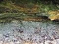 Pebbly sandstones over mudshales (Mississippian-Pennsylvanian unconformity; Mary Campbell Cave, Cuyahoga Gorge, Cuyahoga Falls, Ohio, USA) 1 (30383924587).jpg