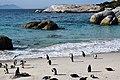 Penguins at Boulders Beach, Cape Town (18).jpg