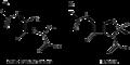 Penicillin vs PG terminus structure.png