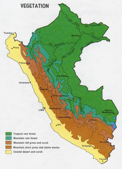 Vegetation of Peru. Mountain rainforest in blue-green.