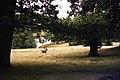 Petworth Park deer running.jpg