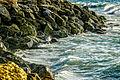 PikiWiki Israel 45293 Beach at Yafo .jpg