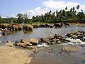 Pinnawela Elephant Orphanage - panoramio.jpg