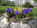 Planter in the garden at Whitewebbs House, Enfield - geograph.org.uk - 1260650.jpg