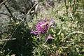 Plants in Gramaiser Tal 02.JPG