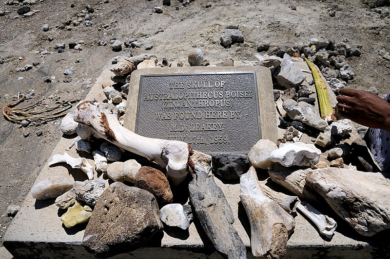 File:Plaque marking the discovery of Australopithecus in Tanzania.jpg