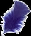 Pluma-azul-2L.png