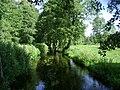 Poland. Gmina Jedwabno. Forests 016.JPG
